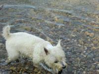 hund-im-wasser